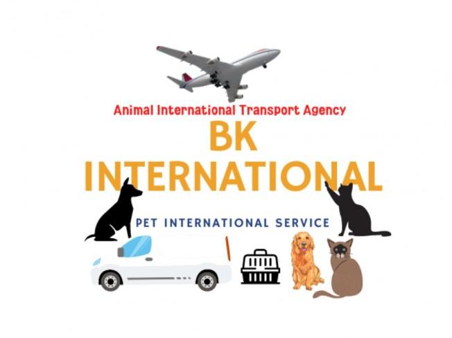 반려동물 해외 여행 규정및 해외 출국운송 드립니다.