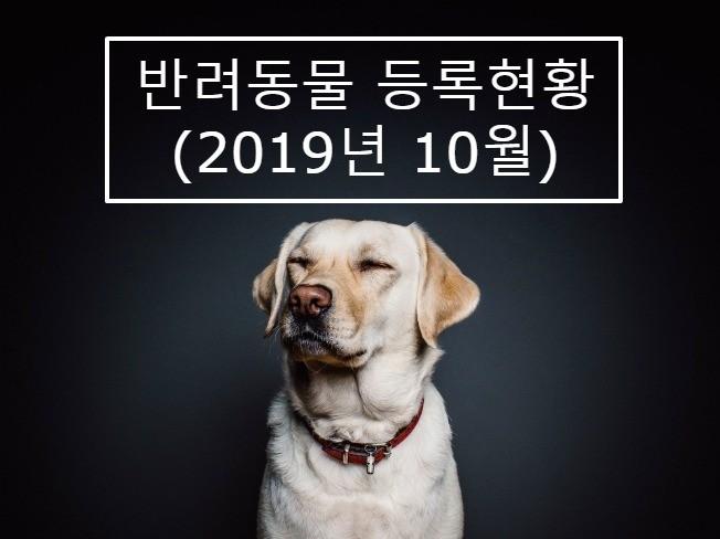 반려동물 등록분포현황  2019년 10월 서울시 드립니다.