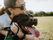 강아지 입양해서  기르는 방법(선택방법, 관리방법, 교육훈련 등)을 알려드립니다.