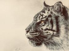 동물 연필 드로잉 그려드립니다.