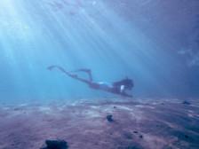 물 속의 편암함을 느끼는 인생 스포츠, 프리다이빙의 행복을드립니다.