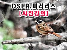 [사진강의][사진수업]DSLR,미러리스 프로처럼 담을 수 있게 가르쳐드립니다.
